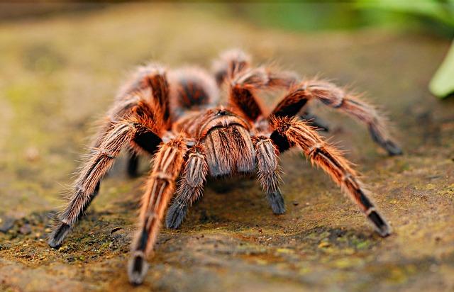 Pavouci jsou zajímaví tvorové