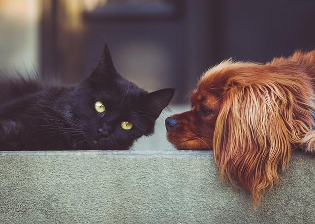 Produkty pro psy a kočky