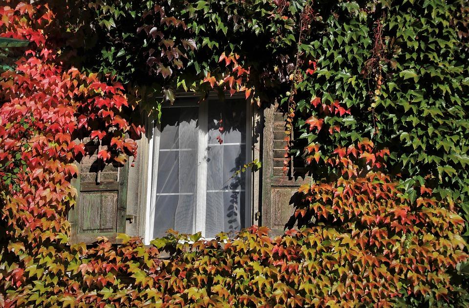okno v dřevostavbě